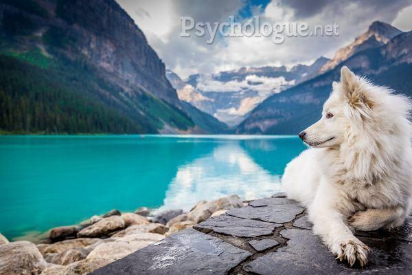 Psychologie animale et thérapies assistées par l'animal