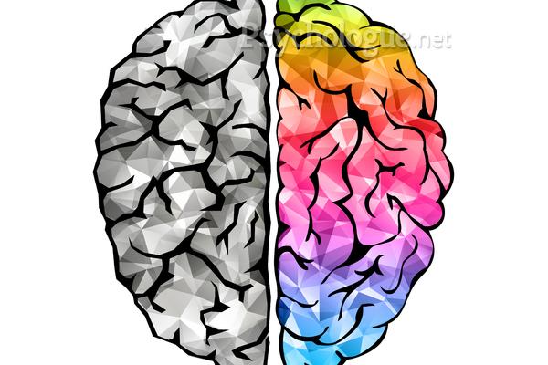Quelle est votre intelligence dominante ?