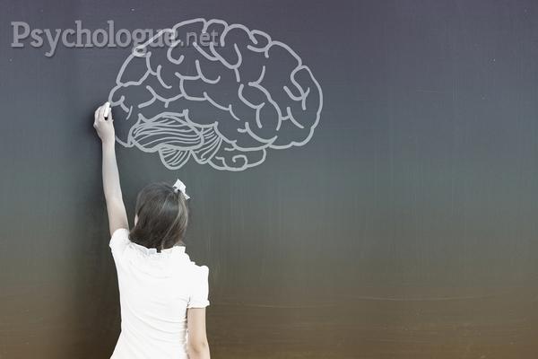 Comment fonctionne le cerveau d'un enfant précoce ?