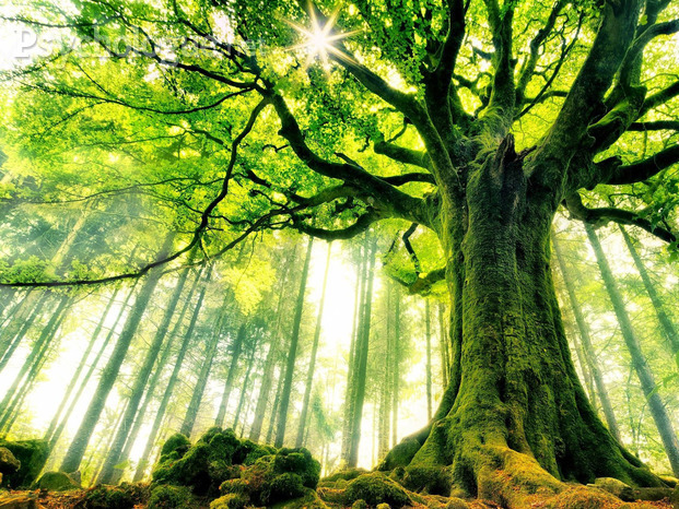 nature_big_tree
